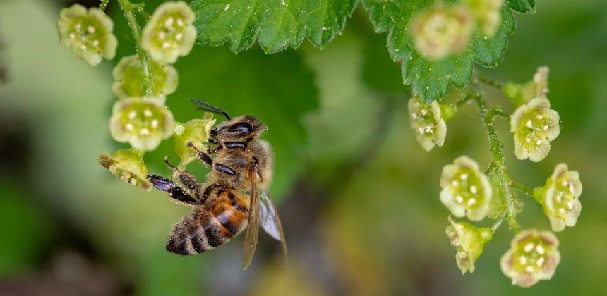 zuckerersatz honig herstellung